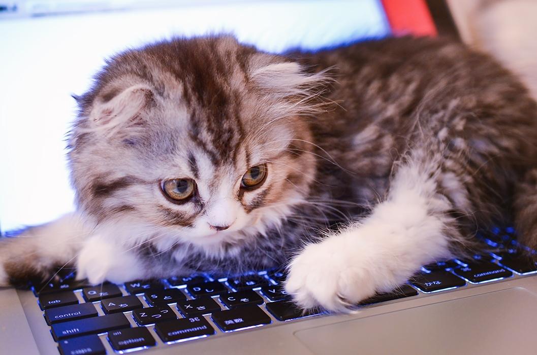 覚えておくと便利なMacのキーボードショートカット(初級編)