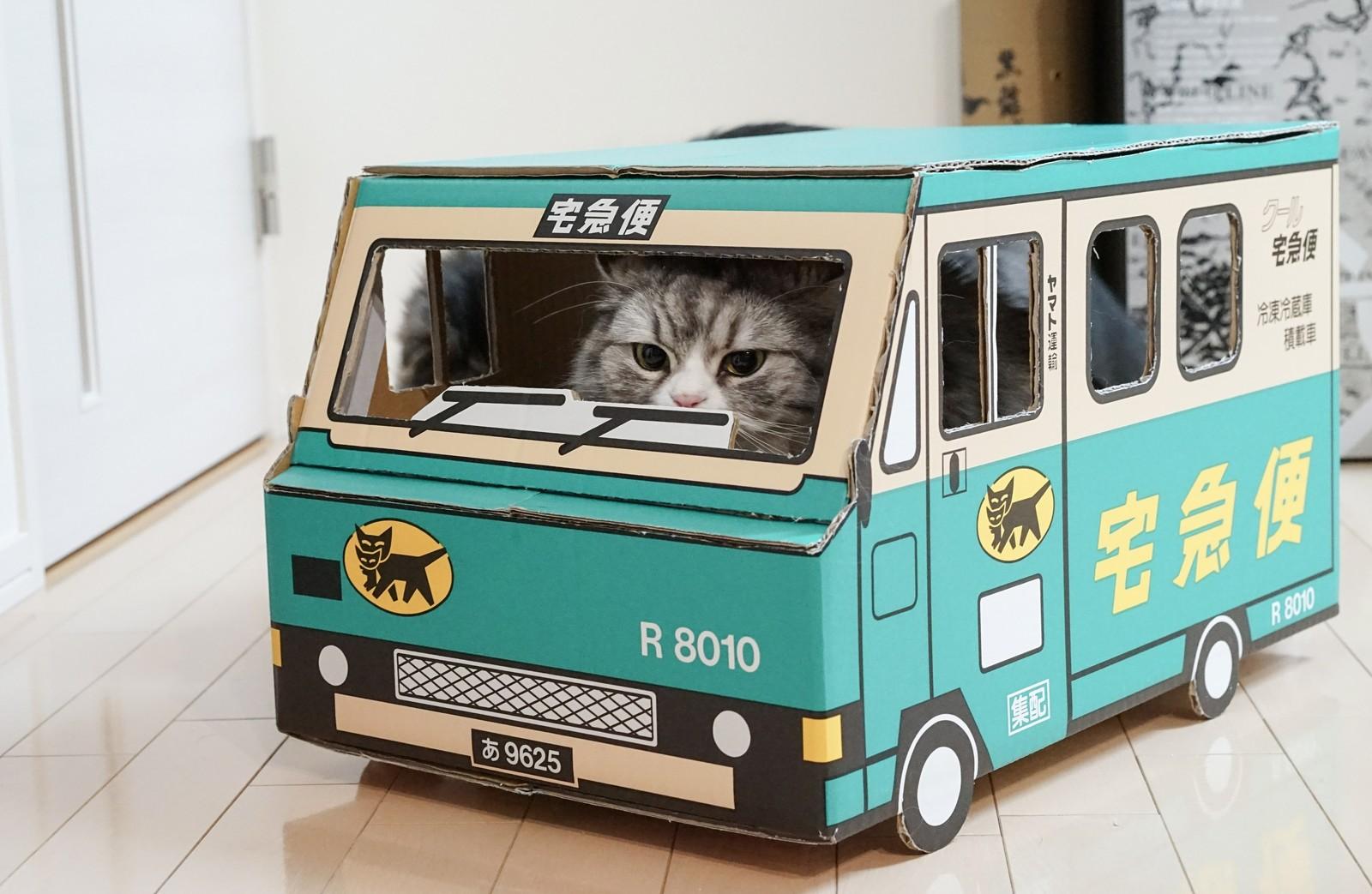猫のしつけがグンとらくになる3つのポイント